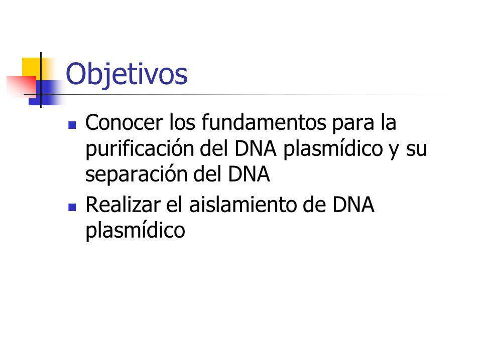 Objetivos Conocer los fundamentos para la purificación del DNA plasmídico y su separación del DNA.