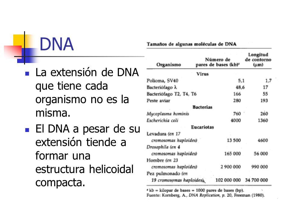 DNA La extensión de DNA que tiene cada organismo no es la misma.