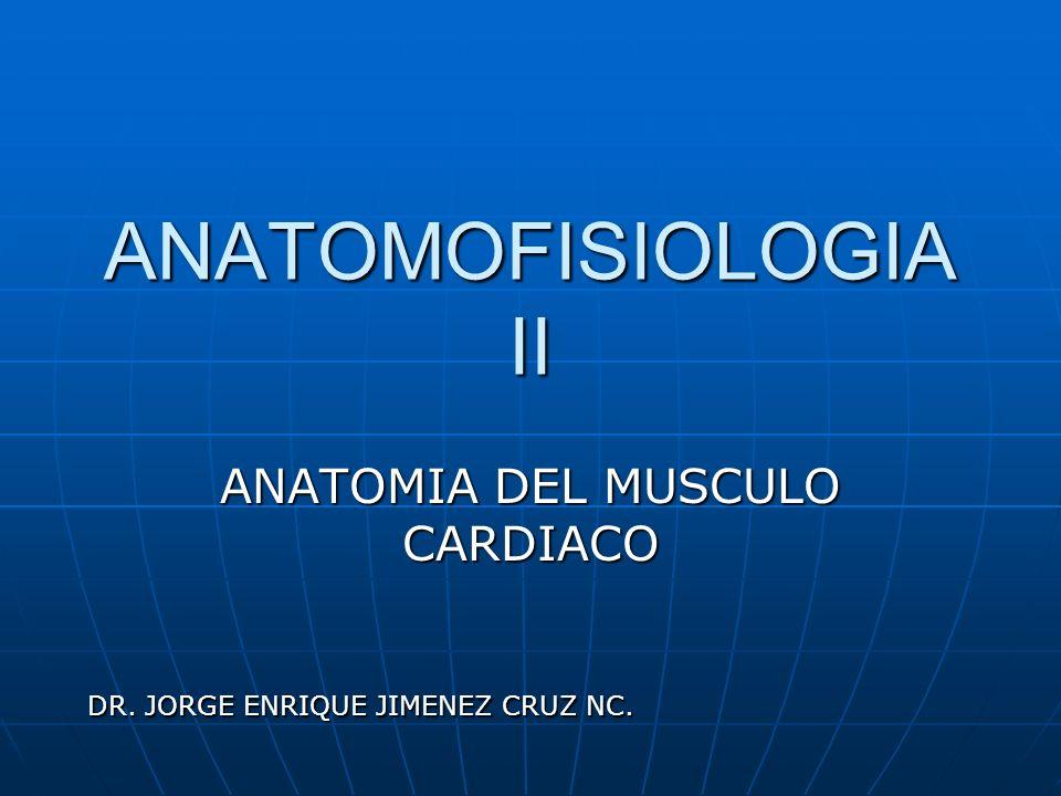 ANATOMIA DEL MUSCULO CARDIACO