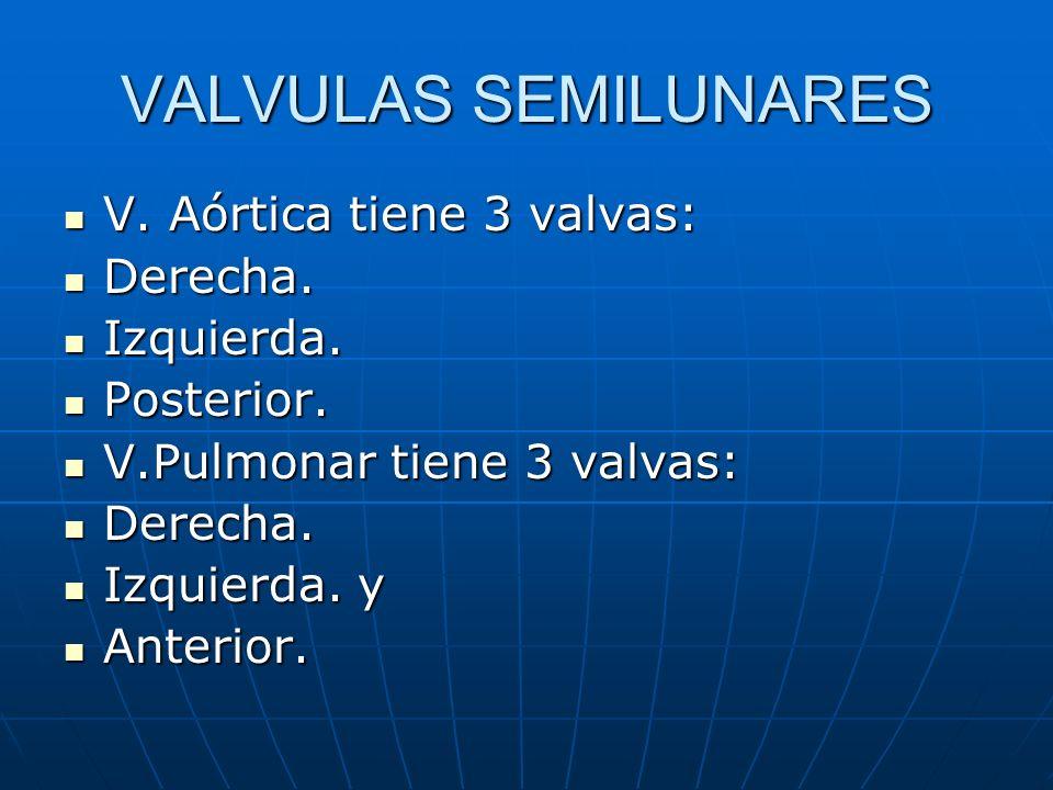 VALVULAS SEMILUNARES V. Aórtica tiene 3 valvas: Derecha. Izquierda.