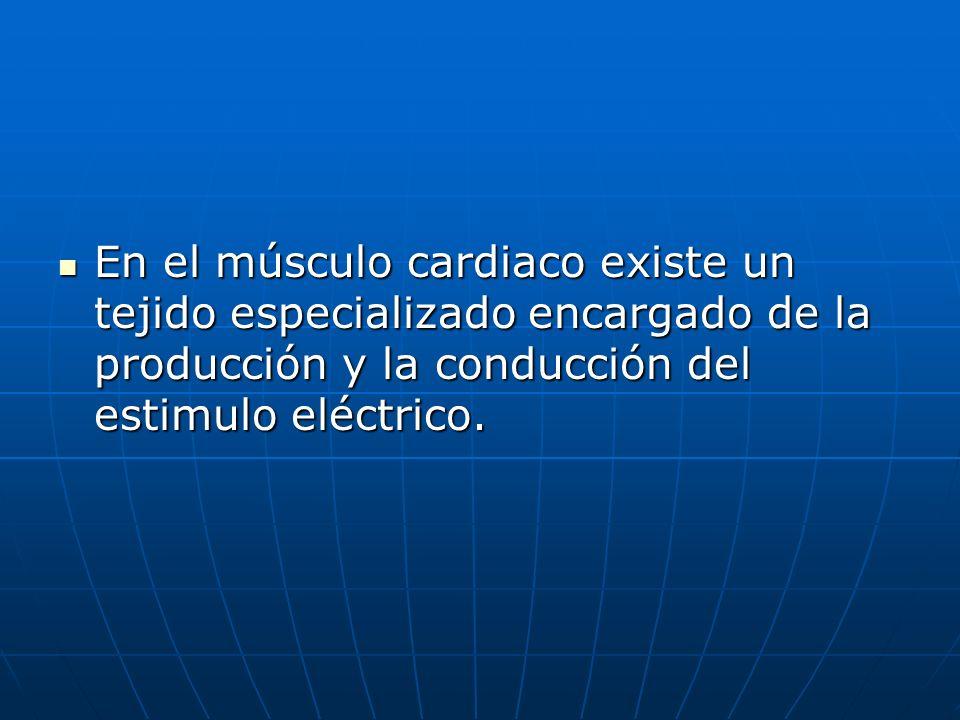 En el músculo cardiaco existe un tejido especializado encargado de la producción y la conducción del estimulo eléctrico.