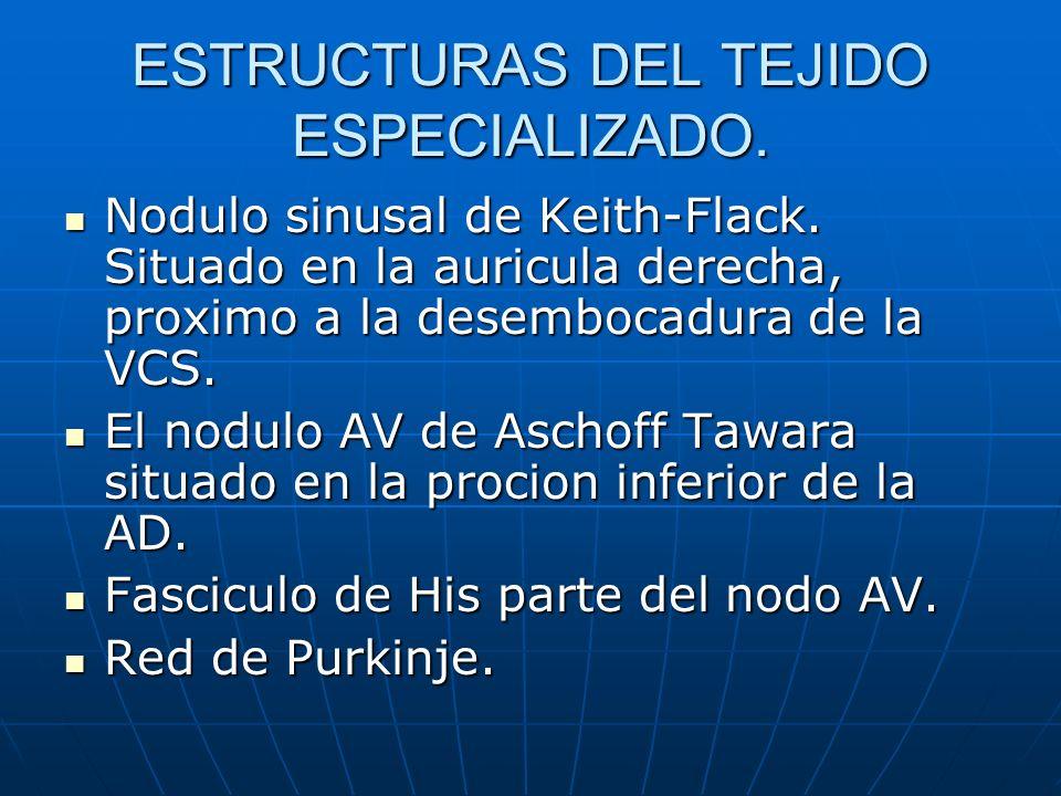 ESTRUCTURAS DEL TEJIDO ESPECIALIZADO.