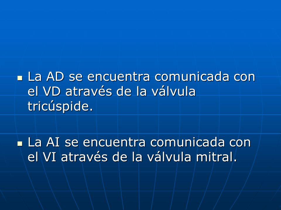 La AD se encuentra comunicada con el VD através de la válvula tricúspide.