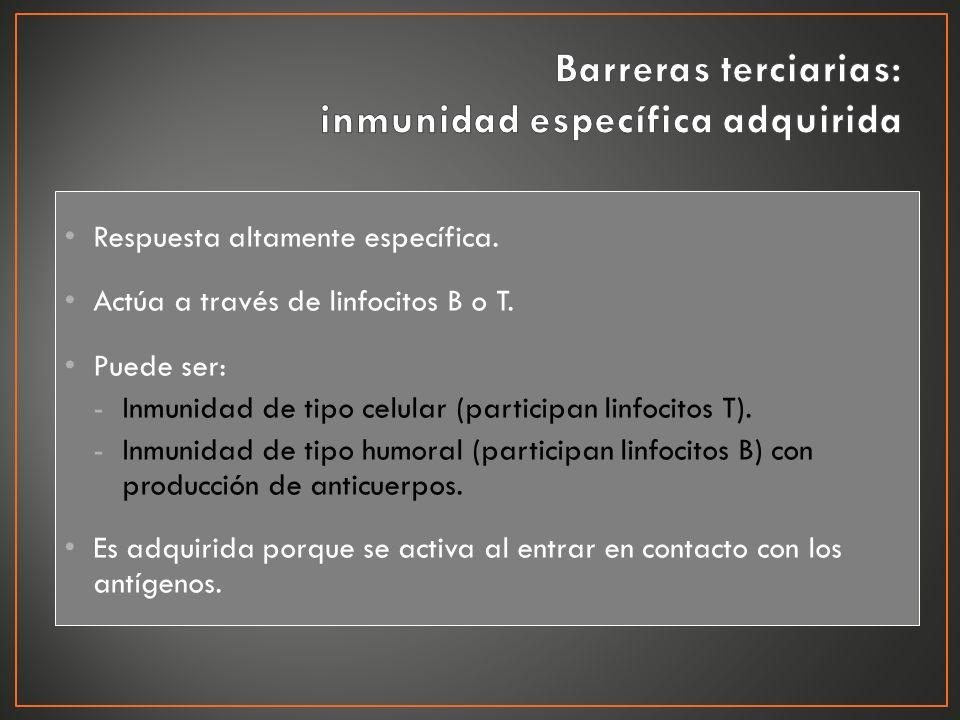 Barreras terciarias: inmunidad específica adquirida