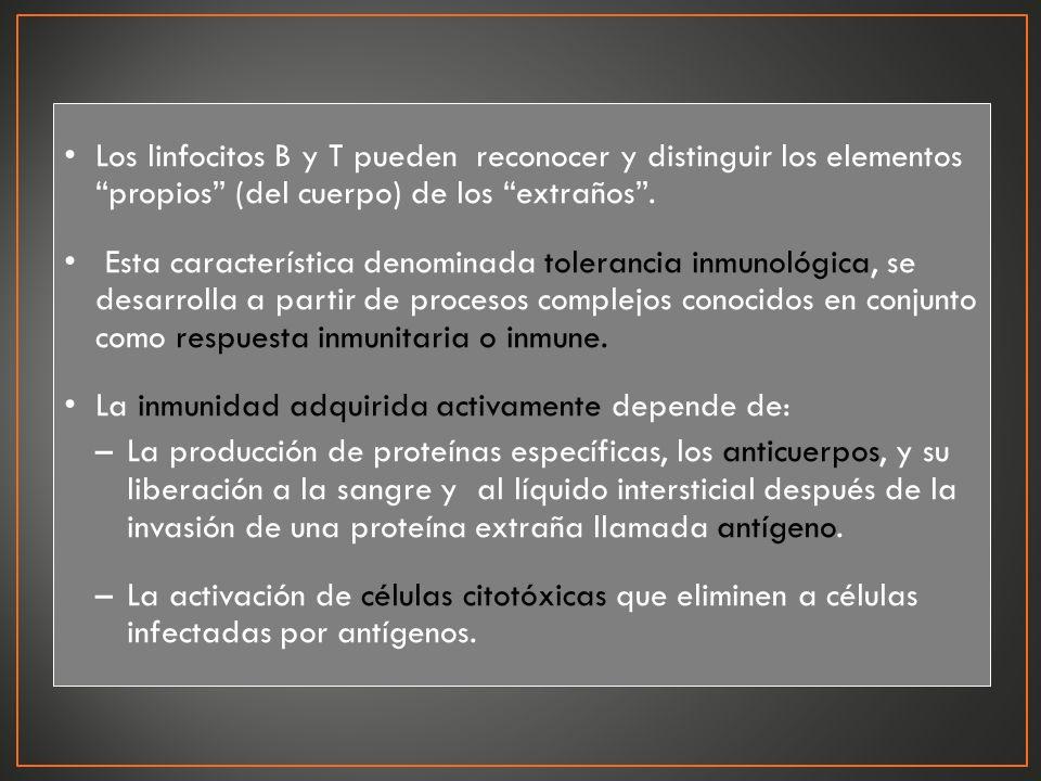 Los linfocitos B y T pueden reconocer y distinguir los elementos propios (del cuerpo) de los extraños .