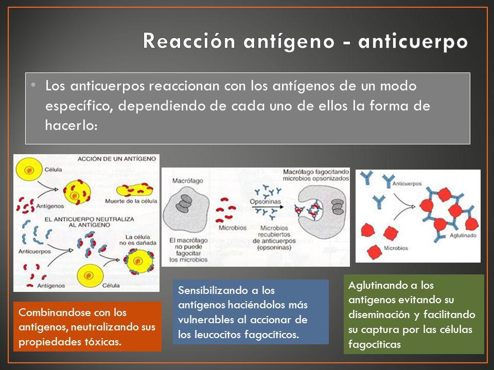 Reacción antígeno - anticuerpo