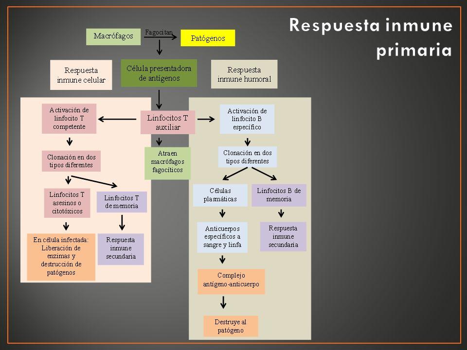 Respuesta inmune primaria