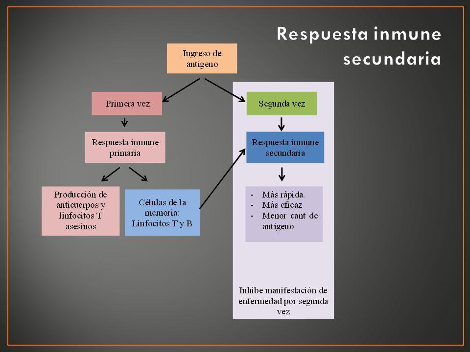 Respuesta inmune secundaria