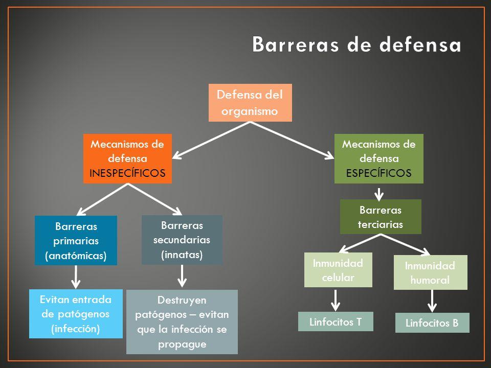 Barreras de defensa Defensa del organismo