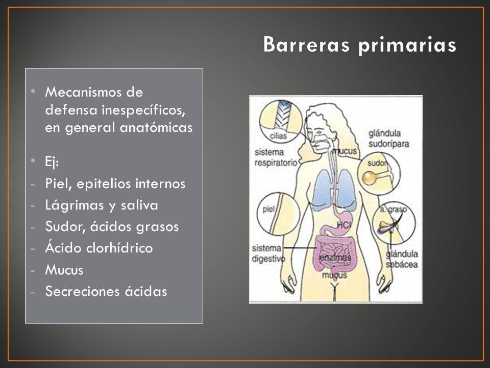 Barreras primarias Mecanismos de defensa inespecíficos, en general anatómicas. Ej: Piel, epitelios internos.