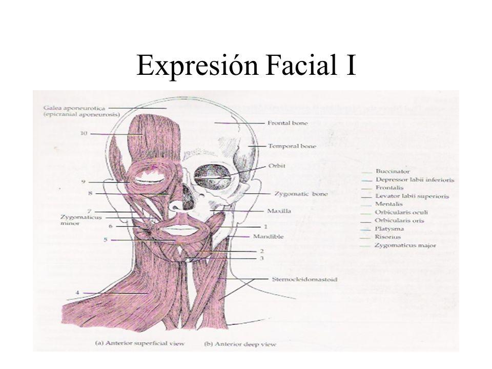 Expresión Facial I