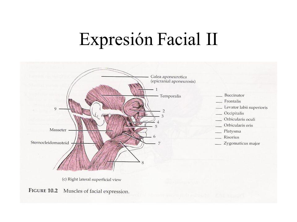 Expresión Facial II