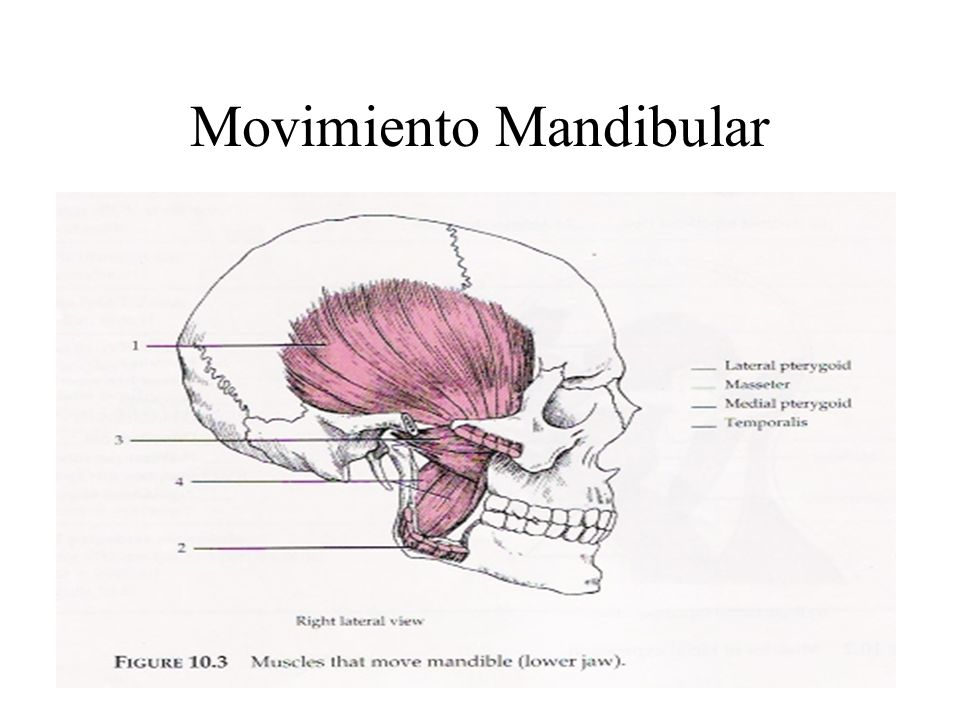Movimiento Mandibular