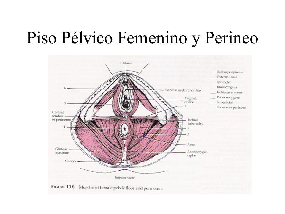Piso Pélvico Femenino y Perineo