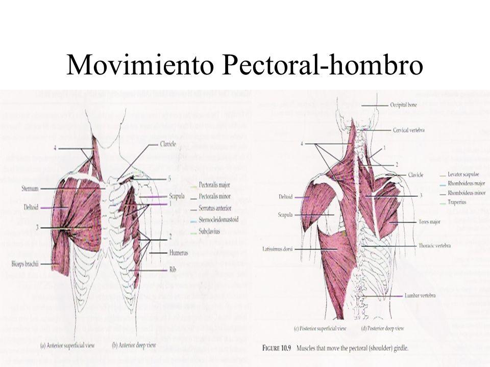 Movimiento Pectoral-hombro