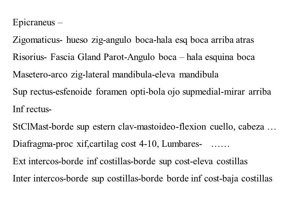 Epicraneus – Zigomaticus- hueso zig-angulo boca-hala esq boca arriba atras. Risorius- Fascia Gland Parot-Angulo boca – hala esquina boca.