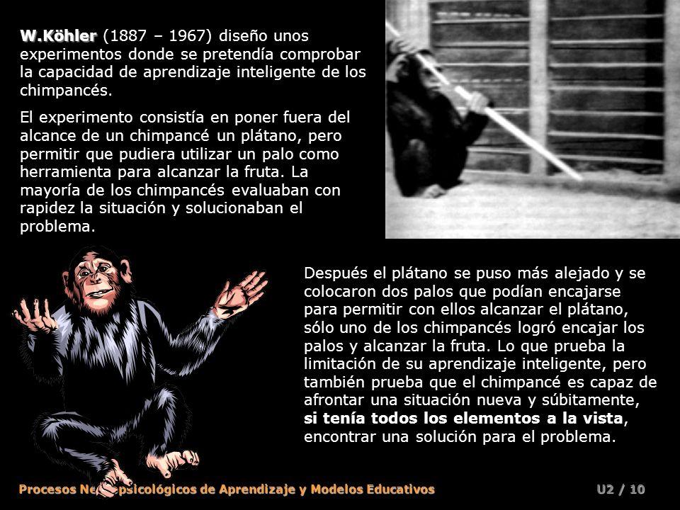 W.Köhler (1887 – 1967) diseño unos experimentos donde se pretendía comprobar la capacidad de aprendizaje inteligente de los chimpancés.