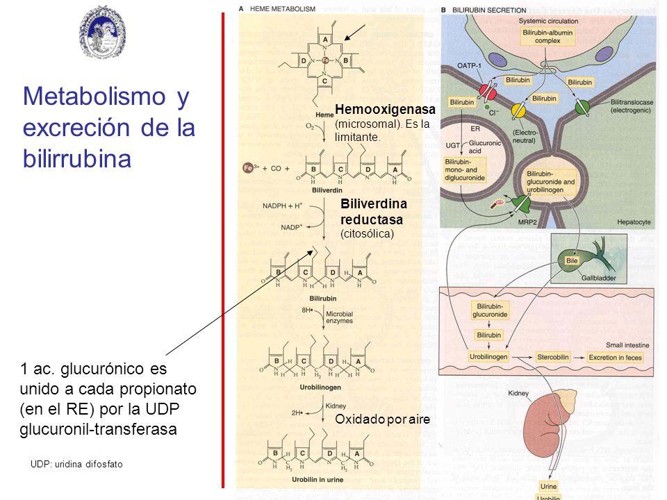 Metabolismo y excreción de la bilirrubina
