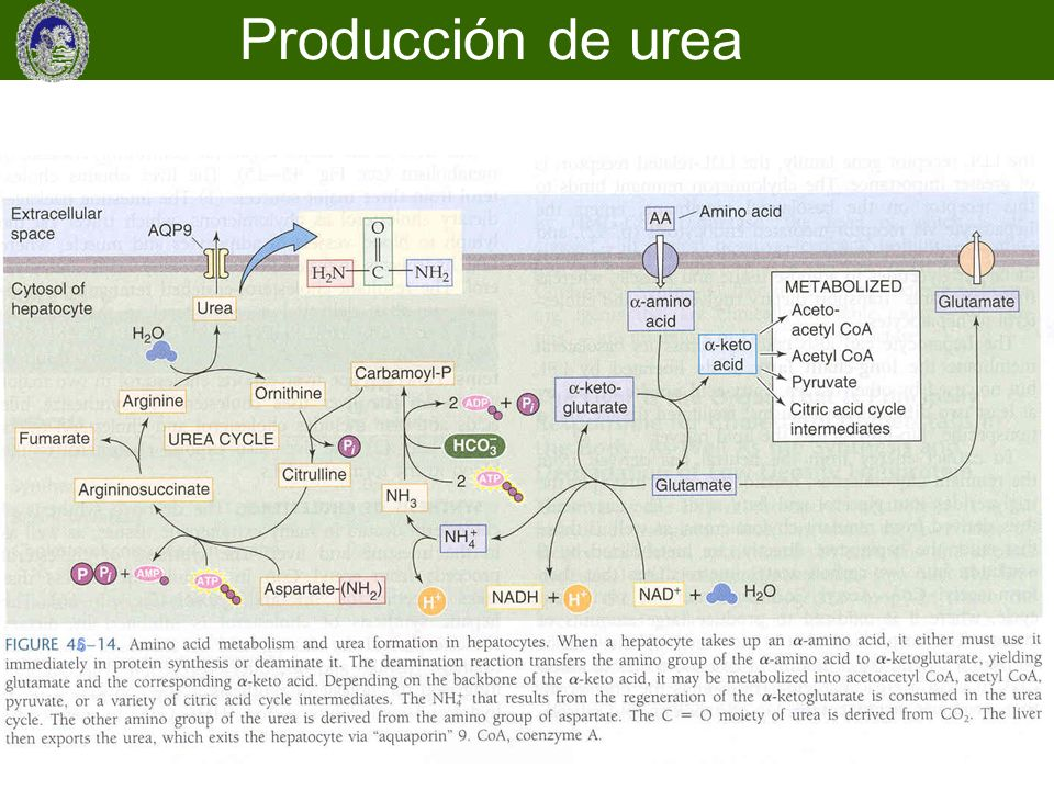 Producción de urea 6