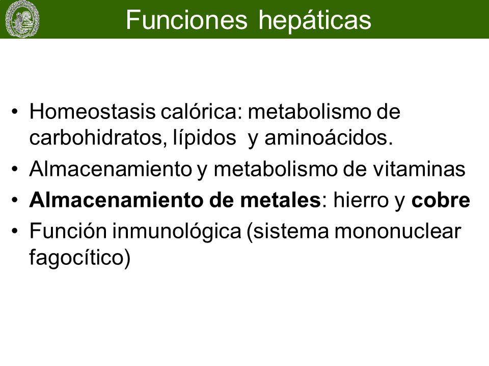 Funciones hepáticas Homeostasis calórica: metabolismo de carbohidratos, lípidos y aminoácidos. Almacenamiento y metabolismo de vitaminas.
