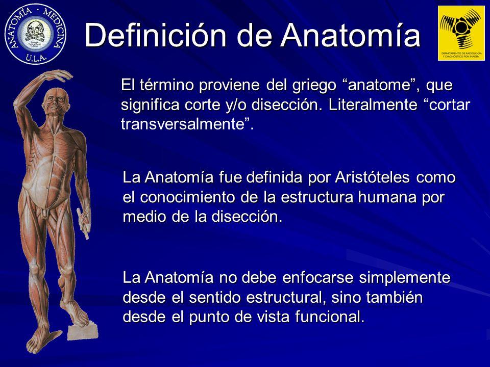 O que significa anatomia