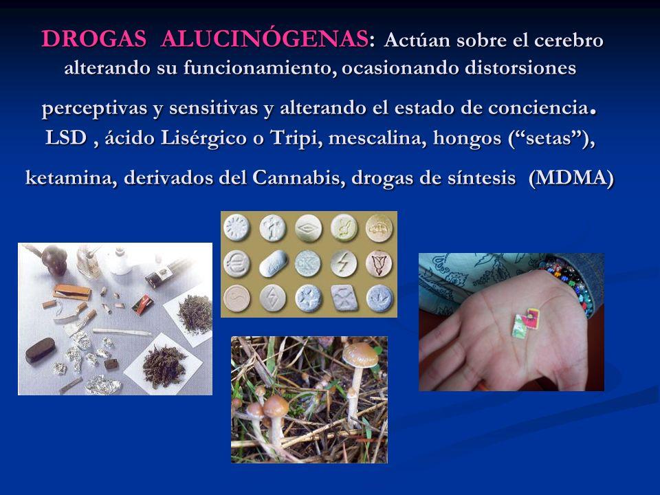 DROGAS ALUCINÓGENAS: Actúan sobre el cerebro alterando su funcionamiento, ocasionando distorsiones perceptivas y sensitivas y alterando el estado de conciencia.