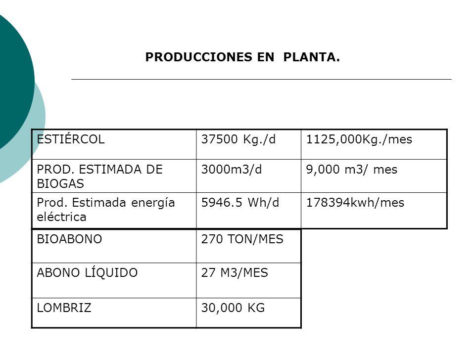 PRODUCCIONES EN PLANTA.