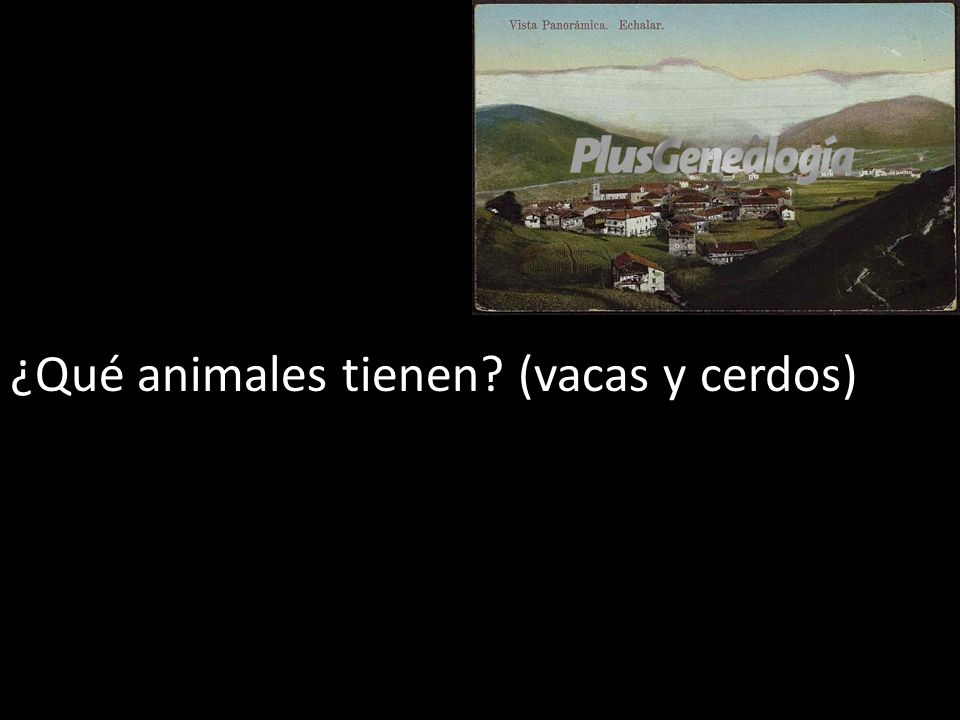 ¿Qué animales tienen (vacas y cerdos)