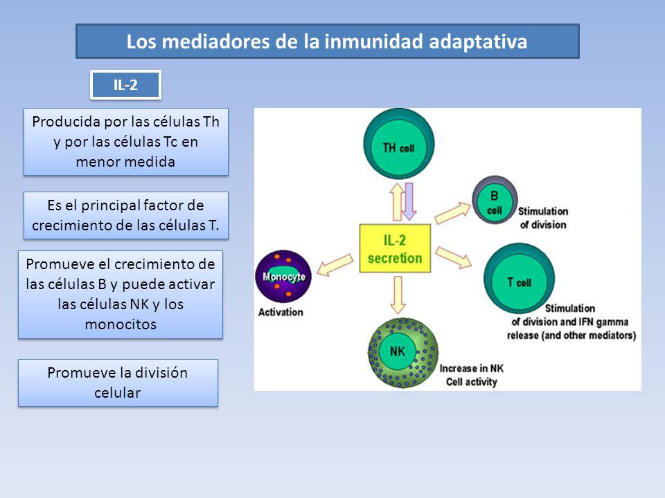 Los mediadores de la inmunidad adaptativa