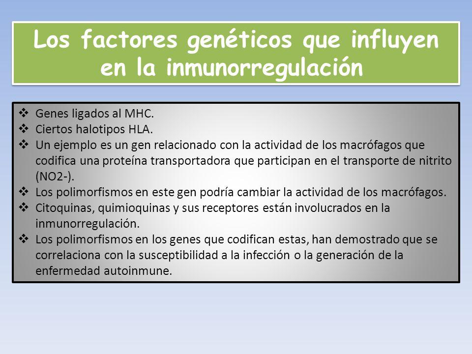 Los factores genéticos que influyen en la inmunorregulación