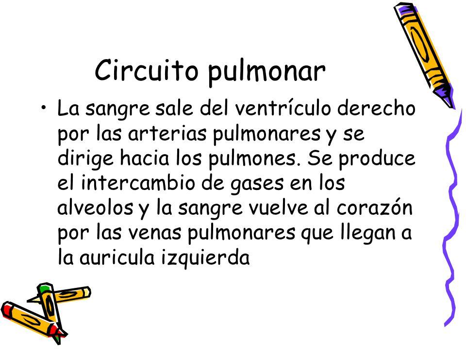 Circuito Pulmonar : Sistema circulatorio corazón sangre vasos sanguíneos ppt