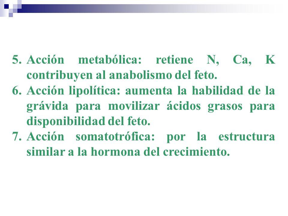 Acción metabólica: retiene N, Ca, K contribuyen al anabolismo del feto.