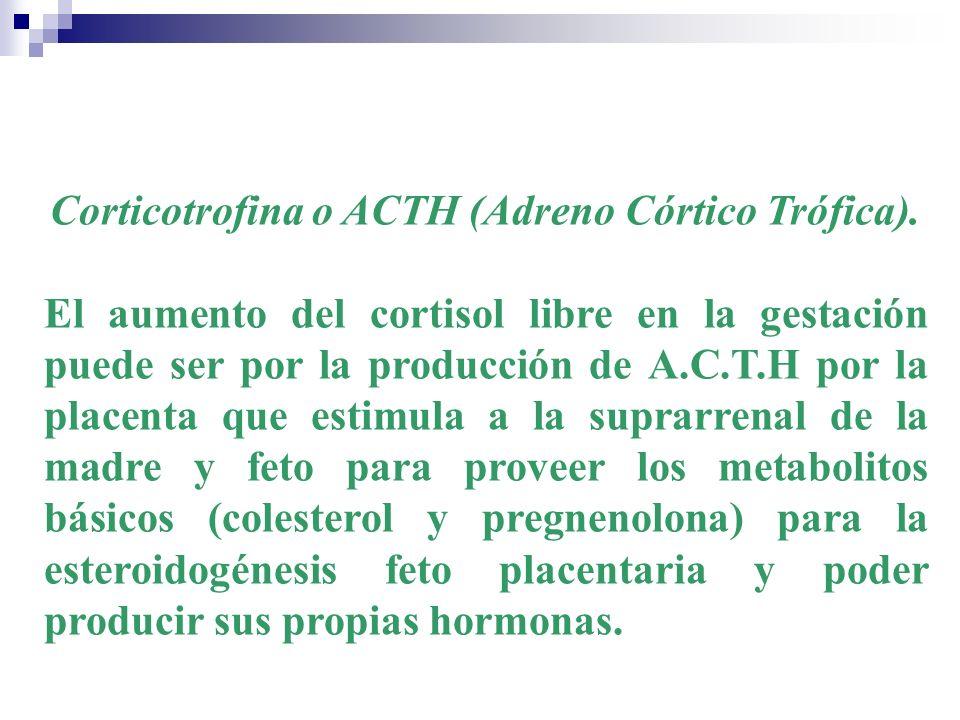 Corticotrofina o ACTH (Adreno Córtico Trófica).