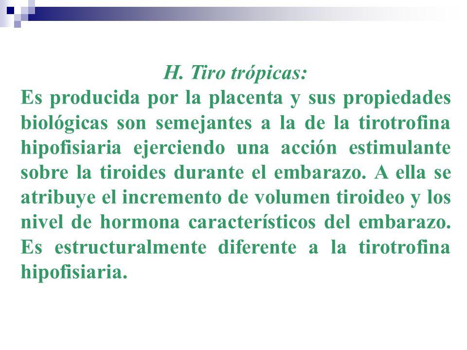 H. Tiro trópicas: