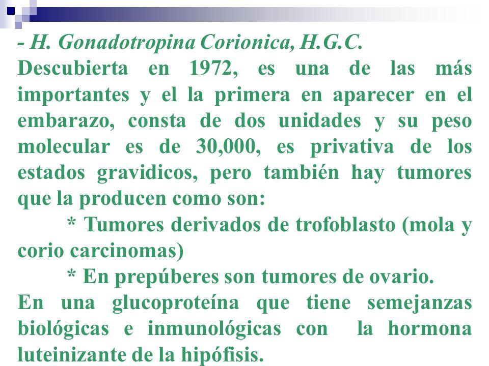 - H. Gonadotropina Corionica, H.G.C.
