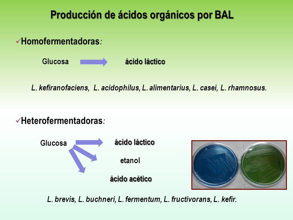 Producción de ácidos orgánicos por BAL