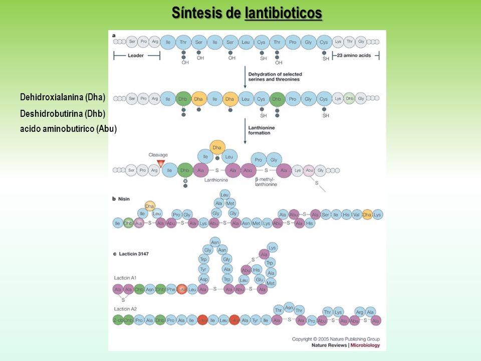 Síntesis de lantibioticos
