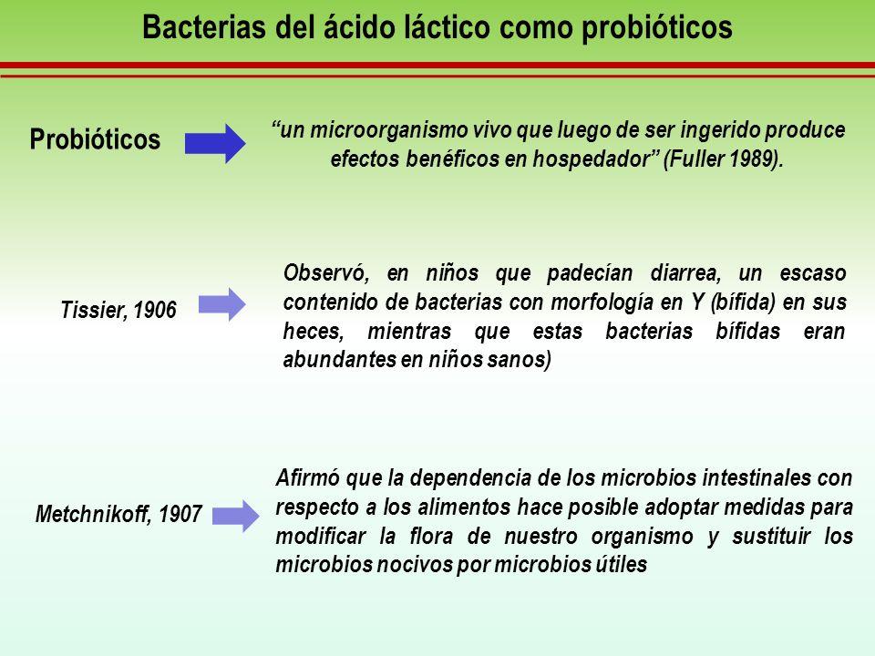 Bacterias del ácido láctico como probióticos