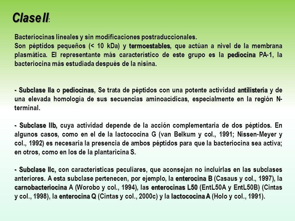 Clase II: Bacteriocinas lineales y sin modificaciones postraduccionales.