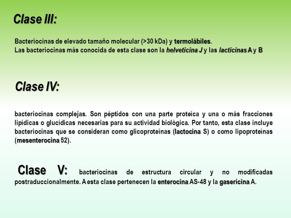 Clase III: Bacteriocinas de elevado tamaño molecular (>30 kDa) y termolábiles.