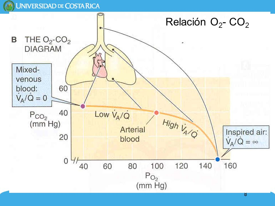 Relación O2- CO2
