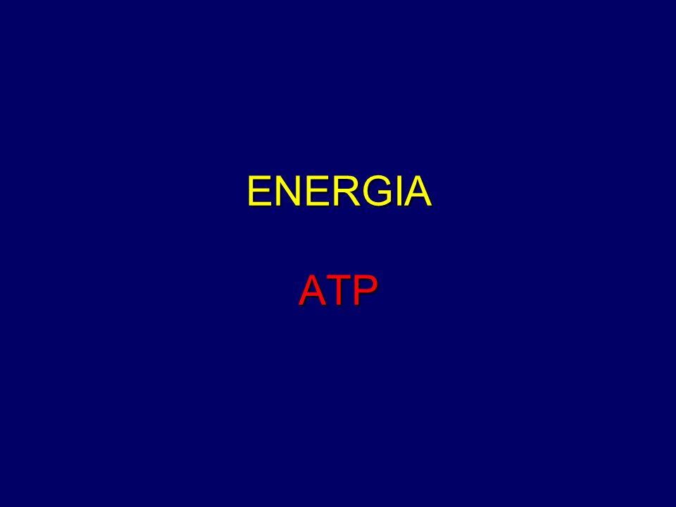 ENERGIA ATP
