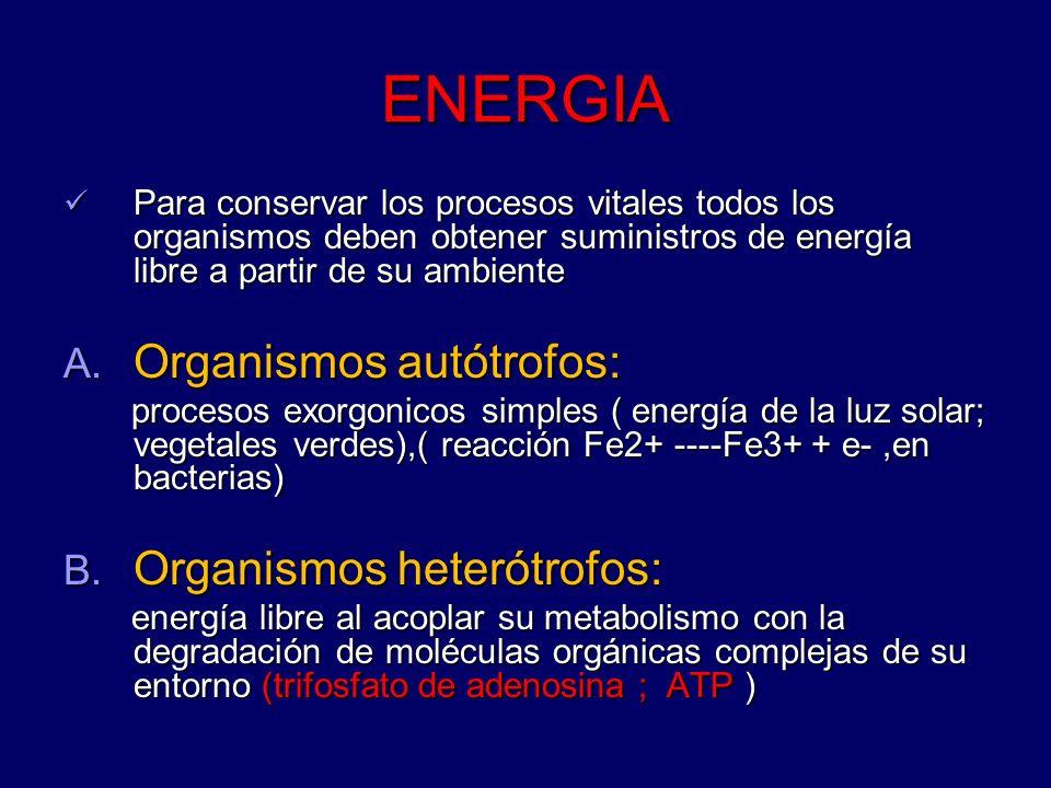 ENERGIA Organismos autótrofos: Organismos heterótrofos: