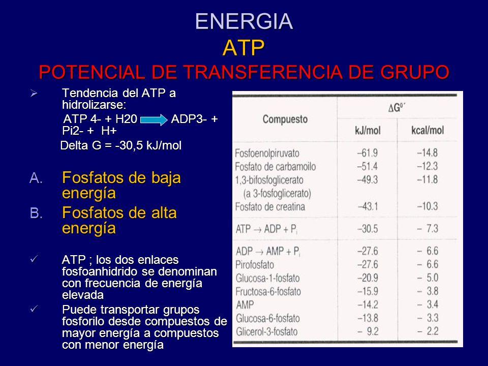 ENERGIA ATP POTENCIAL DE TRANSFERENCIA DE GRUPO