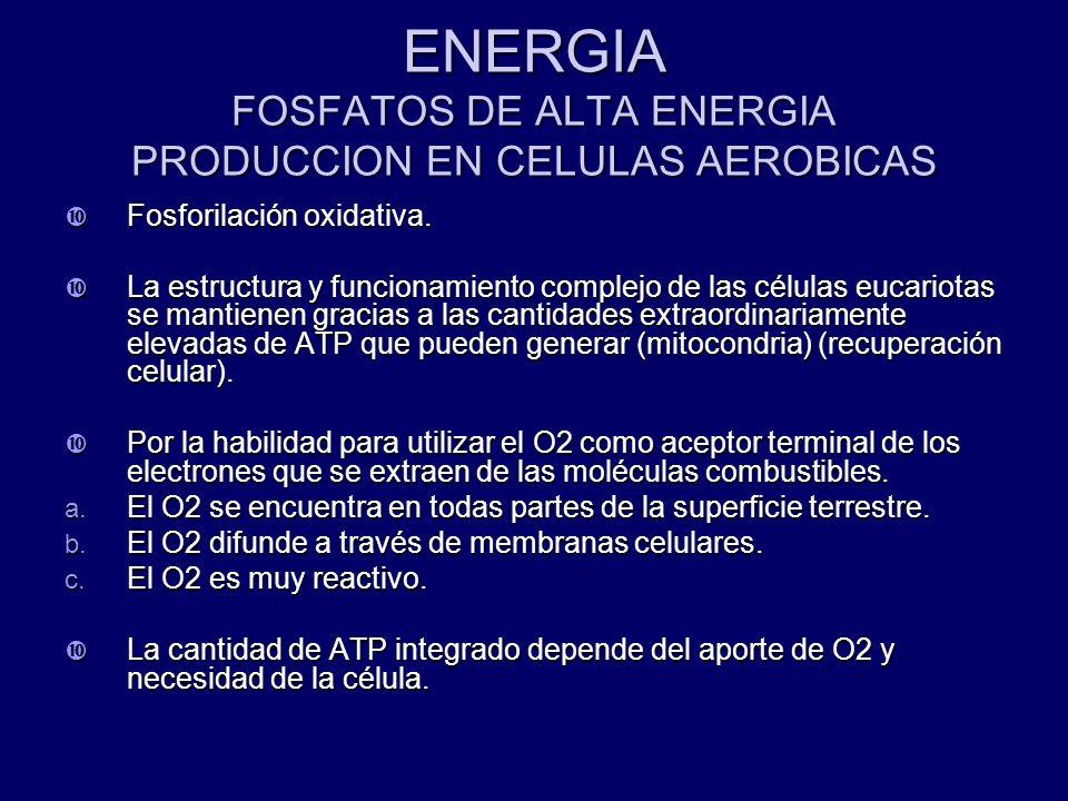 ENERGIA FOSFATOS DE ALTA ENERGIA PRODUCCION EN CELULAS AEROBICAS