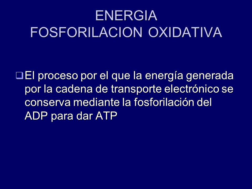 ENERGIA FOSFORILACION OXIDATIVA
