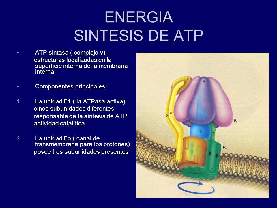 ENERGIA SINTESIS DE ATP