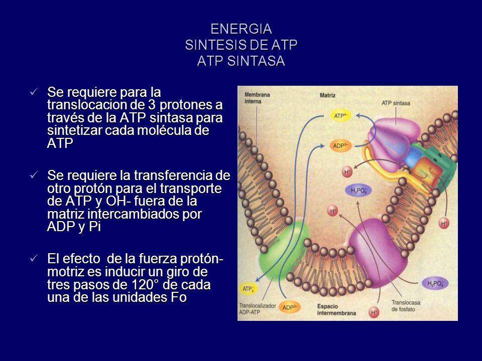ENERGIA SINTESIS DE ATP ATP SINTASA