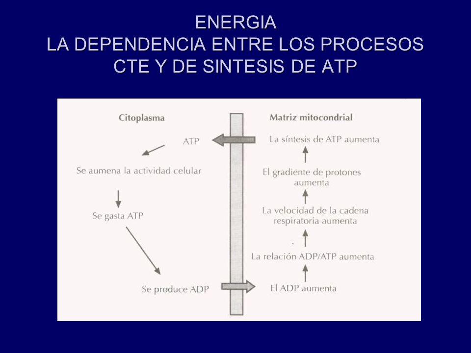 ENERGIA LA DEPENDENCIA ENTRE LOS PROCESOS CTE Y DE SINTESIS DE ATP