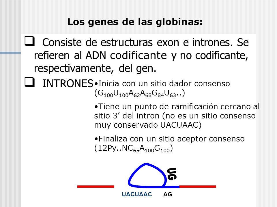 Los genes de las globinas:
